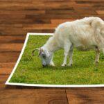 Как создать интерактивную фотографию на Thinglink